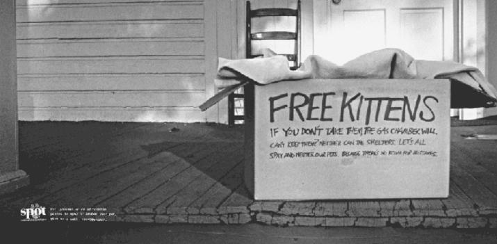 freekittens