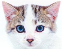wayscat1
